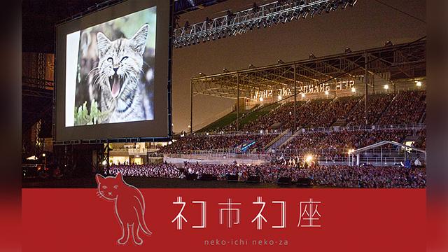 ネコリパ第1のクラウドファンディングは、ネコ映画祭を開催するためのものでした。