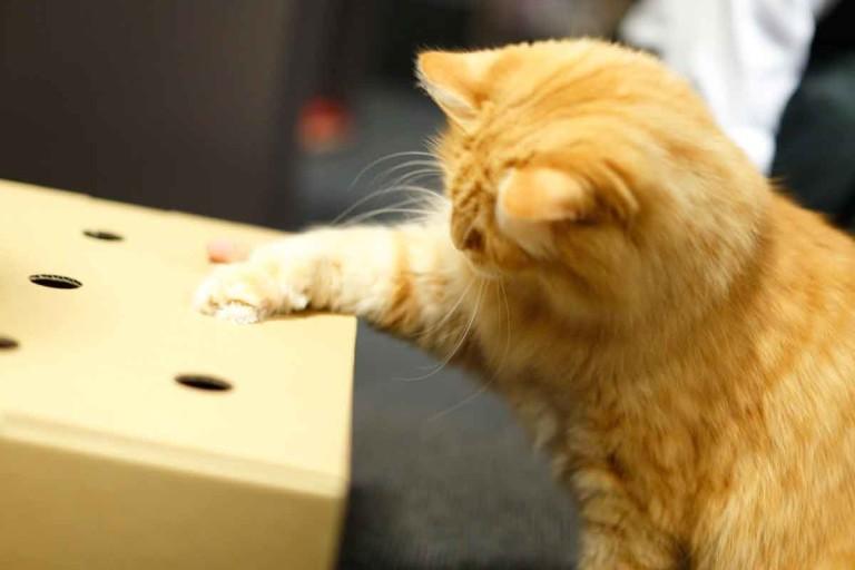 猫もヒトも楽しく遊ぶことで殺処分ゼロに寄与するのが「猫もぐら叩き」のミッション。